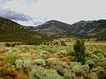 My Public Lands Roadtrip- Wilderness in BLM Nevada (19323891488).jpg