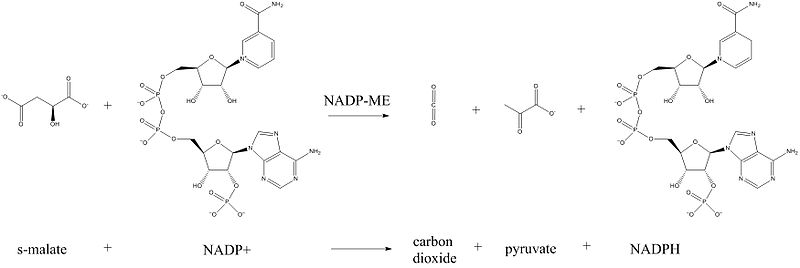 ChemDraw generated NADP-ME chemical reaction detailing the chemical structures involved.