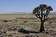 Namibia-1113