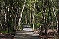 National nature reserve Soos in spring 2015 (4).JPG