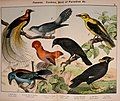 Natural history of the animal kingdom for the use of young people (Plate XI) (5974388813).jpg