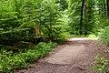 Naturbëschreservat «Beetebuerger Bësch»-102.jpg