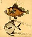 Naturgeschichte in Bildern mit erläuterndem Text (Taf. XXXVI) (6059209640).jpg