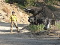 Near Happy Camp, CA, Clan of the Stump Bear, Carlos Nosie photographer, 2008 - panoramio.jpg