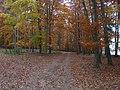 Nedrahovice, lesní cesta, 2011.jpg