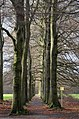 Nice Beech lane at Lichtendaal at Oosterbeek-Schaarsbergen with an inviting sign for walking in this lovely area, just besides the Airborne Cemetry Oosterbeek - panoramio.jpg