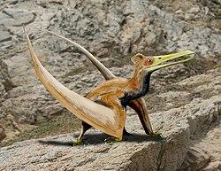 Ningchengopterus liuae.jpg