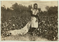 No Known Restrictions Picking Cotton by Lewis W. Hine, 1916 LOC 491307954.jpg