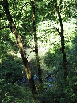 Noble Woods Park with Rock Creek.JPG