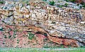 Normal fault & drag folds (eastern flanks of the Bighorn Mountains, Wyoming, USA).jpg