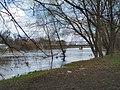 Oder River in Brzeg.jpg