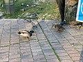 Oiseaux Parc Hôtel Ville Fontenay Bois 9.jpg