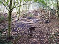 Old Spoil Heap at Foxcote near Cradley - geograph.org.uk - 1078704.jpg