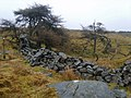 Old Wall, White Moor - geograph.org.uk - 1769647.jpg
