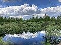 Olmanskie swamps in Belarus - May 2021 03.jpg