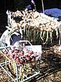 Onion crop drying.jpg