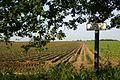 Open fields at Westley - geograph.org.uk - 18801.jpg