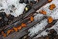 Orange Jelly Drops (3144439628).jpg