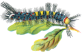 Orgyia antiqua caterpillar male.png