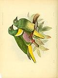 Ornithological miscellany (1876) (14748526205).jpg