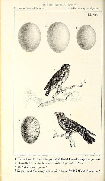 File ornithologie de la savoie ou histoire des oiseaux for Histoire des jardins wikipedia