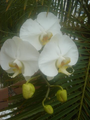 Orquidea008.png