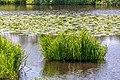 """Osterholz-Scharmbeck, Naturschutzgebiet """"Breites Wasser"""" -- 2018 -- 3034.jpg"""