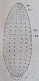 Ottův slovník naučný - obrázek č. 3120.JPG