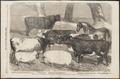 Ovis aries - 1858 - Print - Iconographia Zoologica - Special Collections University of Amsterdam - UBA01 IZ21200123.tif