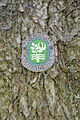 Pëc de Poz Urtijëi Picea abies targeta.jpg
