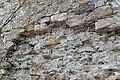 Pörtschach Burgruine Leonstein östliche Schildmauer 24032014 819.jpg