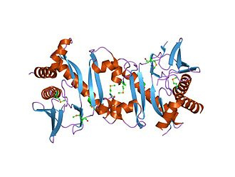 Phosphoribosylaminoimidazolesuccinocarboxamide synthase - Structural genomics, protein TM1243, (SAICAR synthetase)