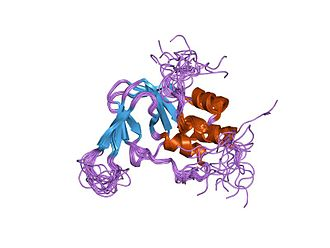 Cyclic nucleotide–gated ion channel - Illustration of a cyclic nucleotide–gated ion channel with a cAMP binding domain.