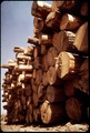 PONDEROSA PINE LOGS STACKED AT PINE INDUSTRY MILL - NARA - 542595.tif