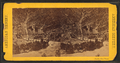 Pacific Rail Road, from Robert N. Dennis collection of stereoscopic views.png
