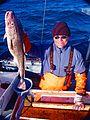 Pacific cod Gadus macrocephalus.jpg