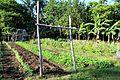 Pakbet Farm, Inapatan Nabua.JPG