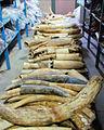 Pallet of seized raw ivory (USFWS).jpg