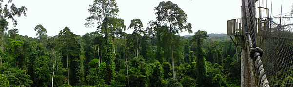 Panorama view of Kakum Nationalpark.jpg