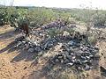 Pantano Arizona Cemetery 2014.jpg