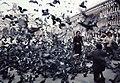 Paolo Monti - Servizio fotografico - BEIC 6358089.jpg