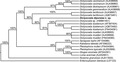 Parasite140027-fig6 Phylogenetic tree based on Bayesian Inference of Dictyocoela spp..tif