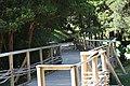 Pasarelas de madera en Parque Nacional Chiloé.jpg