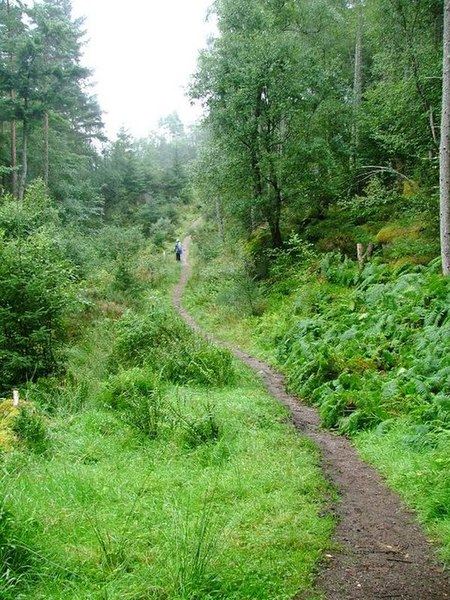 File:Path, Culag Wood - geograph.org.uk - 229359.jpg