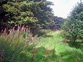 Path through Old Parks Farm Wood - geograph.org.uk - 1478874.jpg
