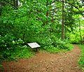 Peavy Arboretum trail.JPG