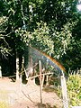 Pequeno Arco-íris.jpg