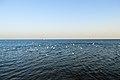 Persian Gulf (12482101873).jpg