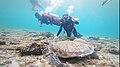 Pescadores Turtles.jpg