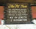 Petrified Forest - Stierch C.jpg